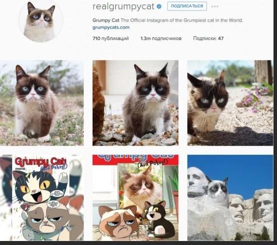 Аккаунт с фотографиями животных